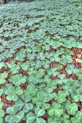 Good Luck Photograph - Clover by Jane Linders