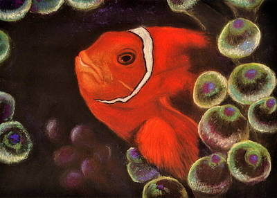 Clown Fish In Hiding  Pastel Art Print by Antonia Citrino