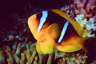 Clown Fish Digital Art - Clown Fish 7 by Roy Pedersen