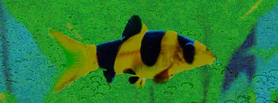 Photograph - Clown Loach by Lisa Brandel