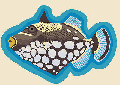 Clown Triggerfish Art Print
