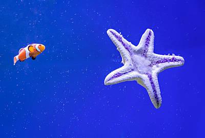 Clown Fish Photograph - Clownfish And Starfish by Steve Harrington