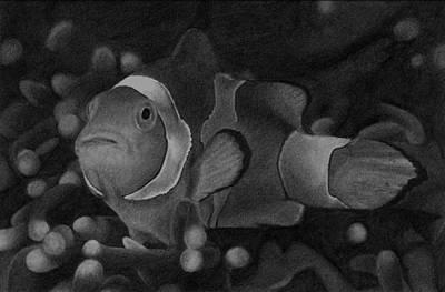 Clown Fish Drawing - Clownfish by James Wing