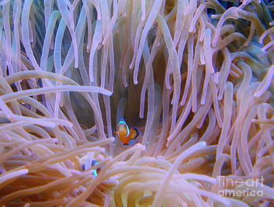Photograph - Clownfish by Rachel Munoz Striggow