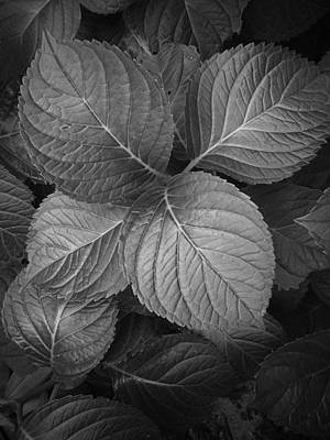 Photograph - Cluster Of Leaves In Black And White by Randall Nyhof