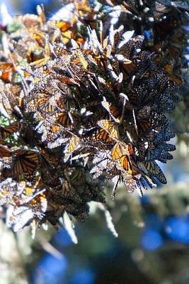 Clustering Monarch Butterflies Art Print by Patricia Sanders