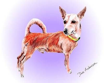 Animal Shelter Drawing - Clyde - A Former Shelter Sweetie by Dave Anderson