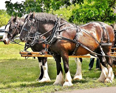 Photograph - Clydesdale Horses by Kim Bemis