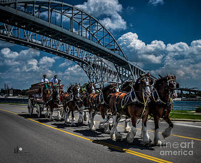 Clydesdales And Blue Water Bridges Art Print