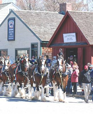 Photograph - Clydesdales In Mystic by Amy Porter