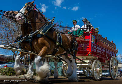 Natchez Photograph - Clydesdales In Natchez by Michael Chapman