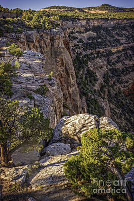 Photograph - Cnm 004 by David Waldrop