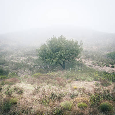Photograph - Coast Live Oak In Morning Fog by Alexander Kunz