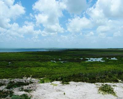 Photograph - Coastal Aransas Nwr by Lizi Beard-Ward