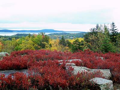 Photograph - Coastal Autumn Colors by Gene Cyr