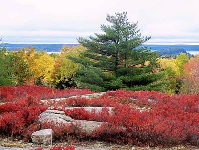 Photograph - Coastal Autumn by Gene Cyr