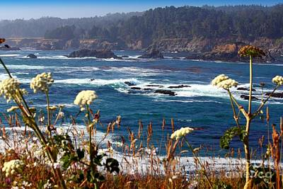 Photograph - Coastal Beauty by Patrick Witz