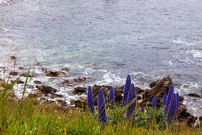 Photograph - Coastal Cliff Flowers by Melinda Ledsome