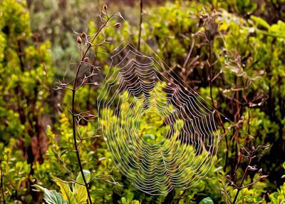Digital Art - Coastal Cobweb by Kathleen Bishop