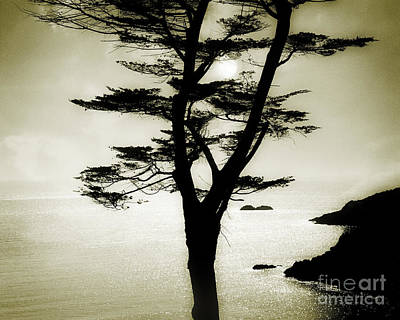 Photograph - Coastal Delight by Edmund Nagele