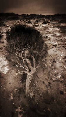 Photograph - Coastal Distress by Tim Nichols