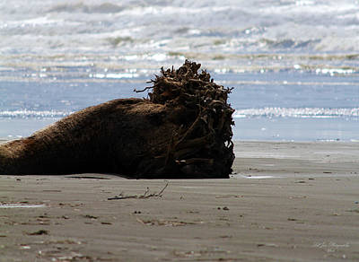 Photograph - Coastal Driftwood by Jeanette C Landstrom