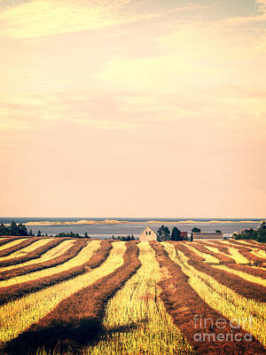Princes Photograph - Coastal Farm Pei by Edward Fielding