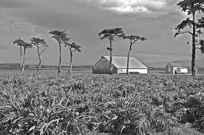Monterey Photograph - Coastal Fields Artichokes 2 by SC Heffner