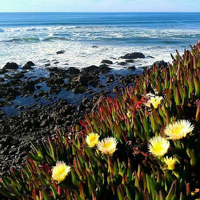Rock Wall Art - Photograph - Coastal Flowers by CML Brown