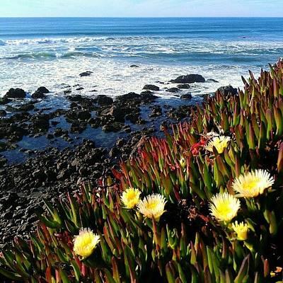 California Wall Art - Photograph - Coastal Flowers by CML Brown