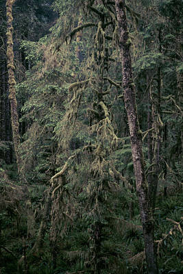Forest Photograph - Coastal Forest 4 by Alexander Kunz
