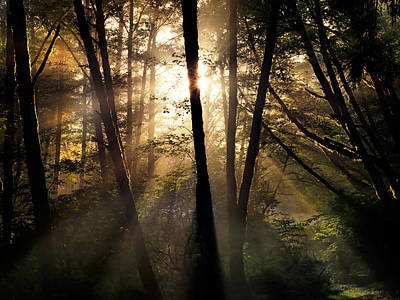 Photograph - Coastal Forest Light by Leland D Howard