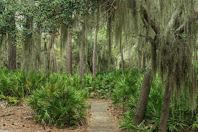 Saw Palmetto Photograph - Coastal Forest With Spanish Moss by Pete Oxford