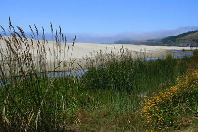 Photograph - Coastal Grasslands by Debra Kaye McKrill
