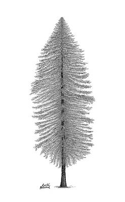 Drawing - Coastal Redwood by Andrea Currie