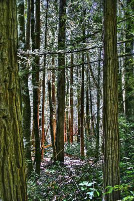 Photograph - Coastal Redwoods by SC Heffner
