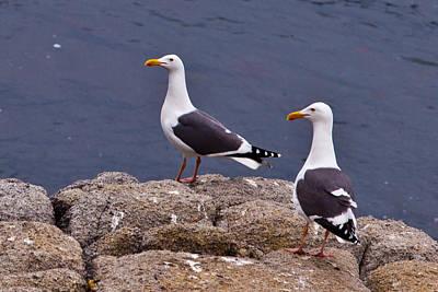 Photograph - Coastal Seagulls by Melinda Ledsome