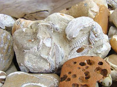 Agate Beach Oregon Photograph - Coastal Shell Fossil Art Prints Rocks Beach by Baslee Troutman