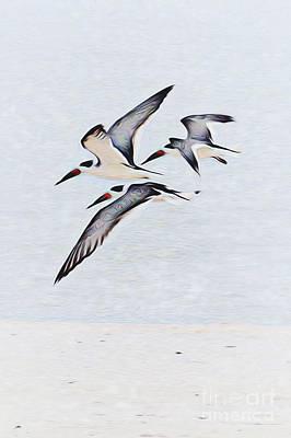 Coastal Skimmers Art Print