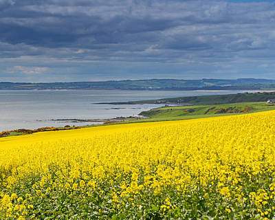 Photograph - Coastal Storm Clouds Yellow Farm Fields Scotland by Schwartz Nature Images
