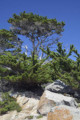 Point Lobos Reserve Photograph - Coastal Trees In California's Point Lobos State Natural Reserve by Bruce Gourley