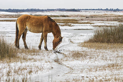 Photograph - Coastal Wild Horse In Snow by Bob Decker