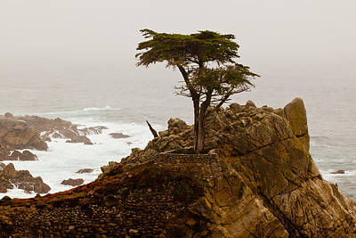 Photograph - Coastline Cypress by Melinda Ledsome