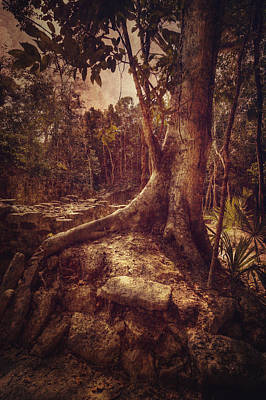 Photograph - Coba Tree by Stuart Deacon