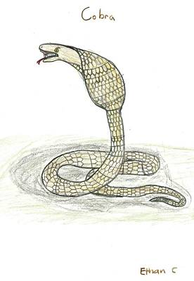 Drawing - Cobra  by Ethan Chaupiz