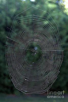 Cobweb Art Print by Bernard Jaubert