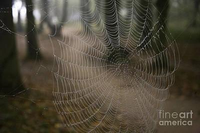Spiderweb Photograph - Cobweb by Heiko Koehrer-Wagner