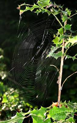 Photograph - Cobweb Lyon Creek - Lake Washington by Amanda Holmes Tzafrir