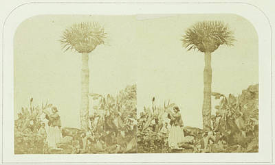 Cochineal Gatherers At Orotava Tenerife, Canary Islands Art Print
