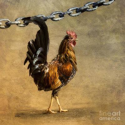 Chicken Digital Art - Cock Of The Walk by Betty LaRue